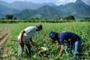 Supermercados cada vez mais ricos e agricultores cada vez mais pobres no mundo, diz pesquisa