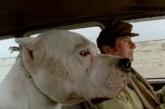 """Desemprego, mérito e individualismo: """"O cachorro"""", de Carlos Sorin"""
