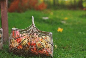 Seriam as cooperativas o futuro da sustentabilidade no mundo do trabalho?