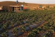 Brasil não vota a favor da Declaração de Direitos dos Camponeses na ONU