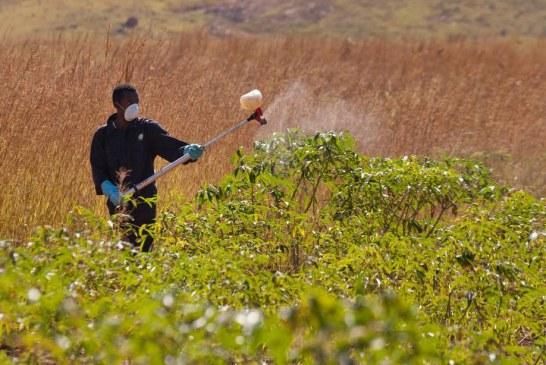 Cegueira e corrosão da pele: novas regras aumentam riscos para trabalhador rural