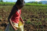 Bolsonaro defende trabalho infantil num país cheio de adultos desempregados