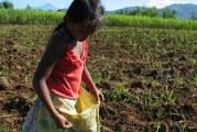 O governo legaliza o trabalho infantil no norte da Argentina