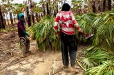 Bolsonaro distorce fiscalização na carnaúba, setor campeão de trabalho escravo no Ceará