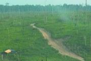Trabalho escravo é usado no desmatamento da Amazônia, diz chefe do MPT
